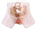 高級透明刮宮模型,婦科檢查模型,教學模型