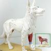 ENOVO頤諾狗針灸模型動物解剖模型寵物模型犬針灸腧穴模型