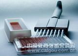 猫α干扰素(IFN-α)ELISA试剂盒