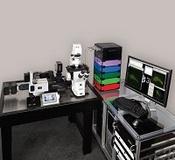 美国3I活细胞显微镜、活体显微镜、高速激光共聚焦显微镜、荧光显微镜、双光子荧光共聚焦显微镜