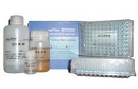 LB培养基固体平板(含抗100μg/ml氨苄青霉素,无菌)