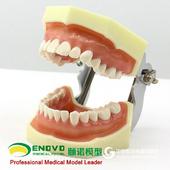 ENOVO颐诺口腔修复模型齿科备牙体窝洞制备排龈仿真离体牙颌架