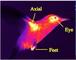 EcoDroneUAS-4无人机红外热成像遥感系统