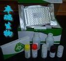 兔抗脑组织抗体(ABAb)Elisa试剂盒