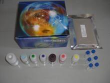 人低分子量细胞角蛋白(CK-LMW)ELISA试剂盒