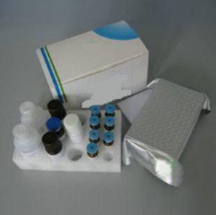 人B细胞生长因子(BCGF)ELISA试剂盒