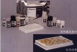 大鼠CXCR3试剂盒(CXC趋化因子受体3)ELISA试剂盒全国质保包邮