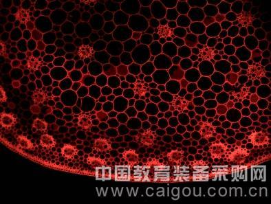 研究级荧光显微镜MF43