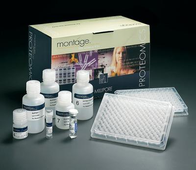 大鼠组织型纤溶酶原激活剂(t-PA)ELISA试剂盒