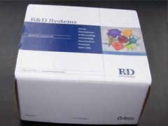 人脱氢表雄酮(DHEA)ELISA试剂盒