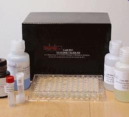 大鼠热休克蛋白20(HSP-20)ELISA Kit