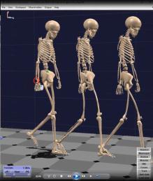 BOB生物力学教学软件