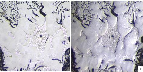 安阳工学院机械工程学院显微镜调试成功