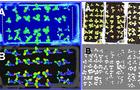 模块式植物表型分析技术方案(六) ——蔬菜病害初期的快速检测与鉴定