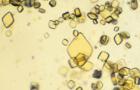 偏光显微镜在药检中的应用