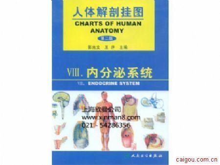 人體解剖掛圖、內分泌系統掛圖