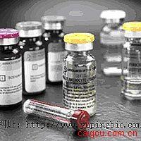 人抗缪勒管激素(AMH)ELISA试剂盒