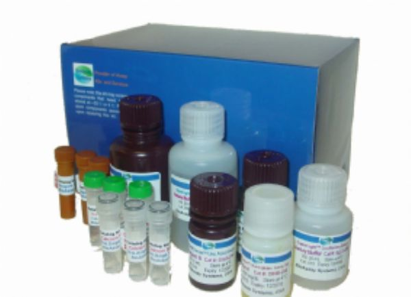 人补体1抑制物抗体(C1INH)ELISA试剂盒