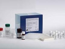 大鼠骨成型蛋白受体Ⅱ(BMPR-Ⅱ)ELISA试剂盒